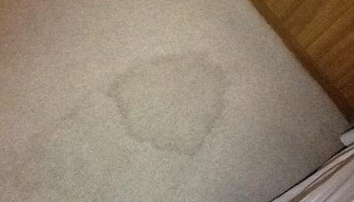 cómo quitar manchas de orina seca de la alfombra