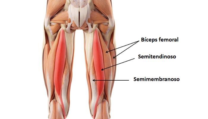 Más información del dolor de isquiotibiales: