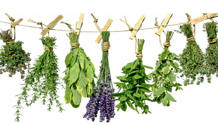 Cómo quitar la ciatica con plantas medicinales