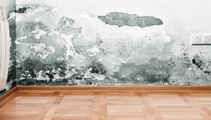 respiratorias. Se comienzan a agrietar los frisos, se desprenden la pintura y el yeso, especialmente en exteriores en las paredes cubiertas por tierra. Consecuencias de tener humedad en una habitación