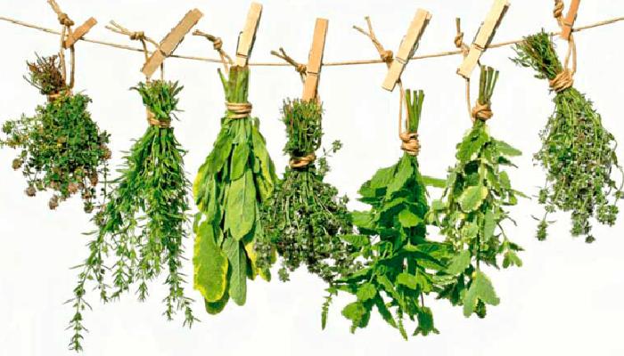 3 Plantas medicinales para calmar la ansiedad y quitar las ganas de comer