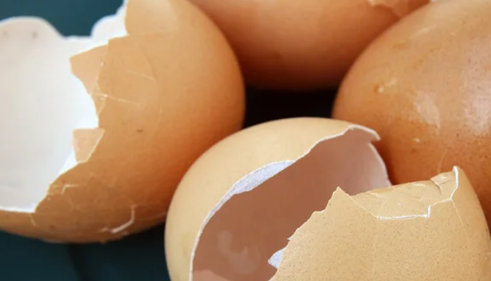 Membrana de la cascara del huevo