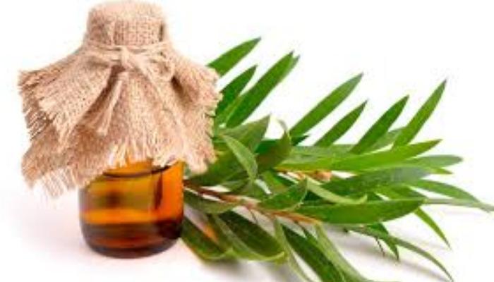 cómo quitar las boqueras con aceite de árbol de té