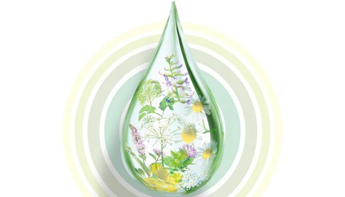 Plantas medicinales para quitar los ardores