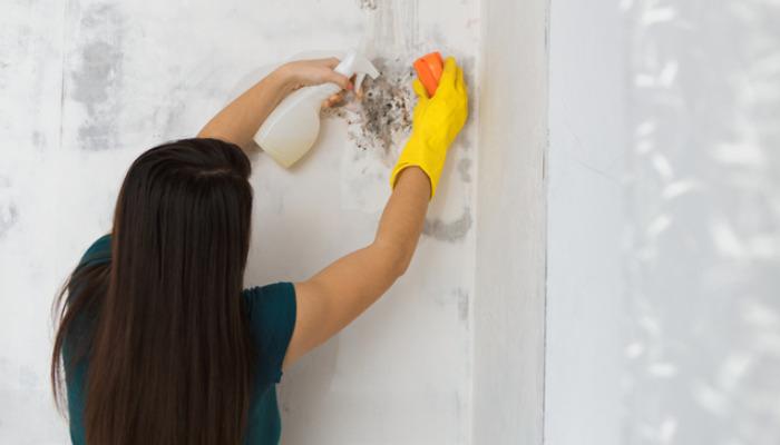 Trucos caseros para limpiar la humedad de la casa