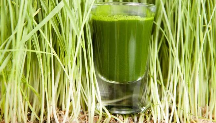 Trigo verde para depurar el organismo y quitar el dolor de riñón