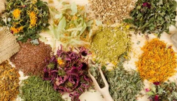 Elimina el dolor y malestares de tortícolis con plantas medicinales