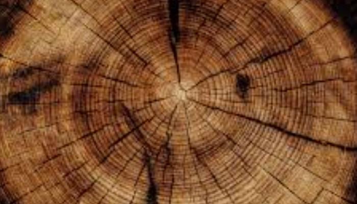 Empapar la madera con gasolina