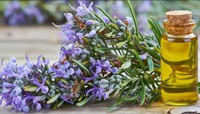 El efecto antinfrlamatorio del aceite de romero permitirá que el dolor de cuello disminuya considerablemente