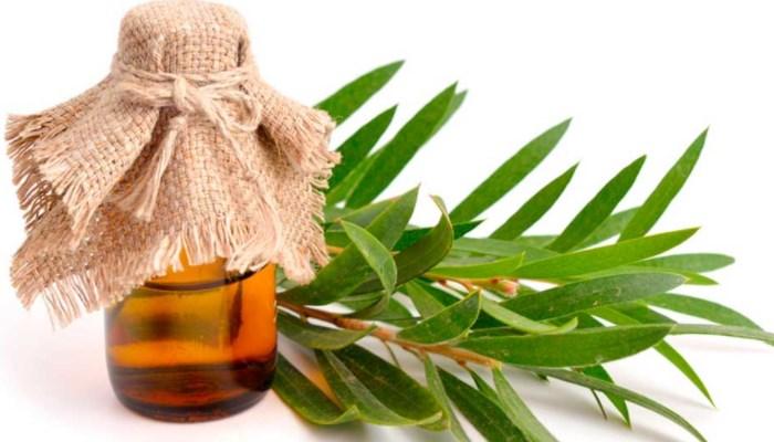 Aceite del árbol del té para quitar la humedad de la pared